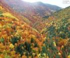 Forest in herfst kleuren