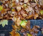 Natte bladeren