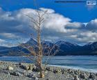 Een droge boom in de buurt van Abraham meer, Alberta, Canada