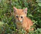 Kostbare kitten
