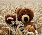 Teddy bear, granen