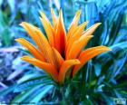 Exotische oranje bloem