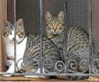 Twee katten in een venster