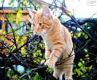 Een kitten in een boom