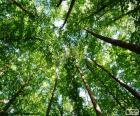 Toppen van de bomen