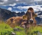 Koe rusten