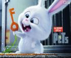 Snowball, een wit konijn