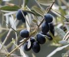 Zwarte olijftak