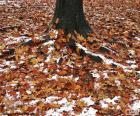 Bladeren en sneeuw