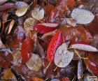 Bladeren van de herfst nat