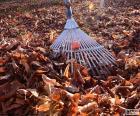 Het verzamelen van de bladeren