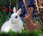 Wit konijn en de andere chocolade