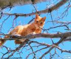 Kat op een tak