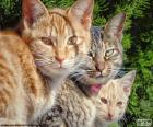 Drie katten staren