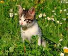 Kat op het gebied