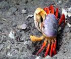 Krab kleuren