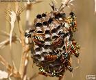 Wasp zwerm