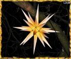 Een mooie Moravische ster te decoreren en Christmas oplichten