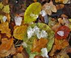 Bladeren en ijs