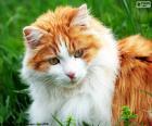 Een elegante kat