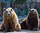 Twee bruine beren