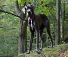 puzzel Duitse dog