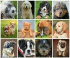 Collage van honden