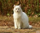 Witte kat zitten