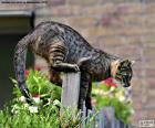 Kat op een hek