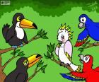Vijf vogels van Julieta Vitali
