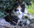 Verborgen Kitten