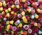 Multi-gekleurde rozen