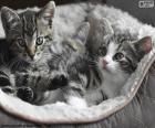 Twee schattige kittens