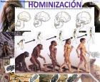 Hominization proces