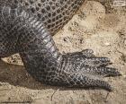 De voet van de krokodil