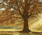 Loofboom in de herfst