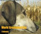 Wereld Greyhound Day