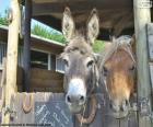 De hoofden en de pony van de ezel