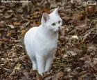 Wit katje