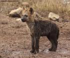 Het puppy van Hyena