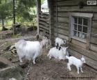 puzzel De familie van de geit