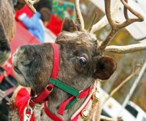 puzzel Reno kerst met een string van klokken