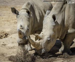 puzzel Rhino eten