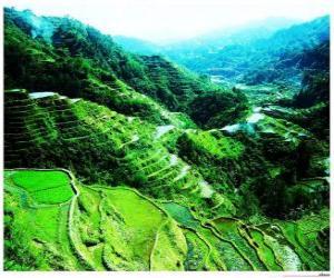 puzzel Rijst Terrassen van de Filipijnse Cordilleras