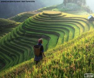 puzzel Rijstvelden, Thailand