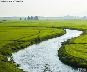 puzzel Rivier tussen rijstvelden