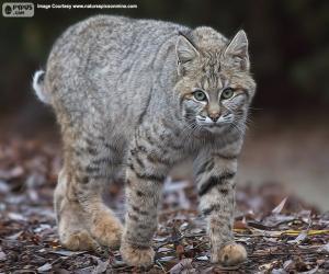 puzzel Rode Lynx