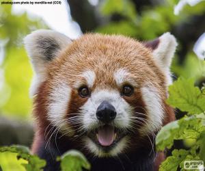 puzzel Rode Panda gezicht