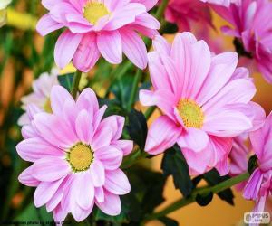 puzzel Roze madeliefjes