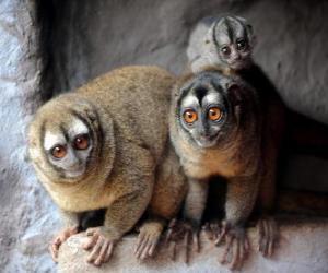 puzzel Schattig owl